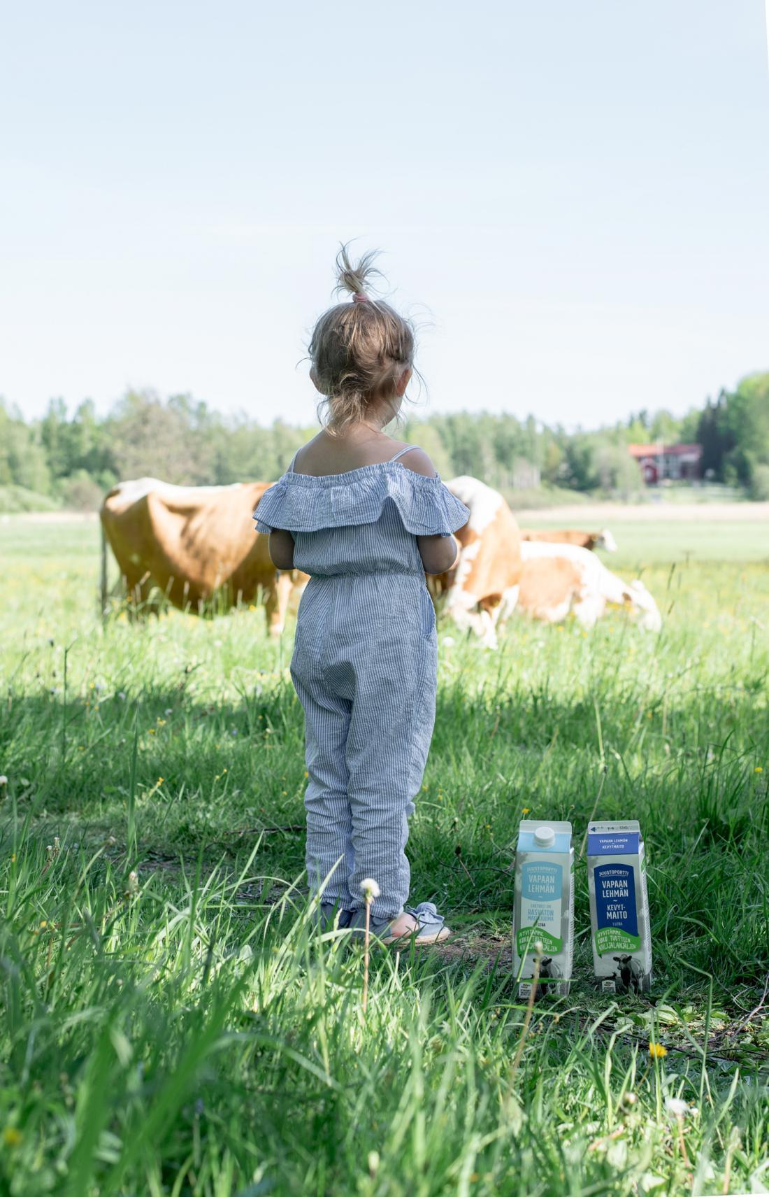 Lehmän Maito